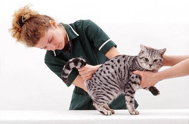 как лечить животное от мочекаменной болезни
