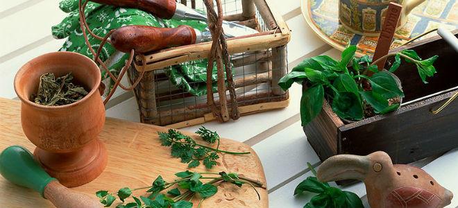 какие травы пить при холецистите и панкреатите