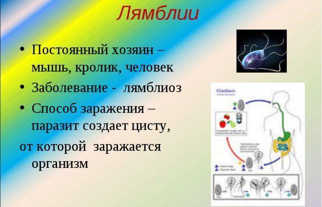 лямблиоз поджелудочной железы лечение