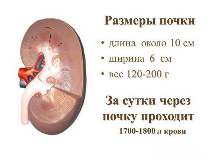 увеличение почки при мочекаменной болезни