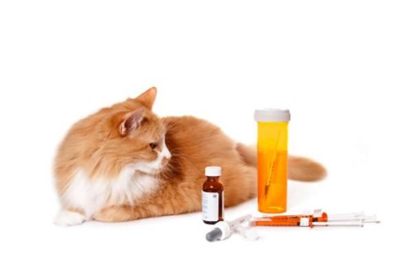 можно ли давать коту бисептол от цистита